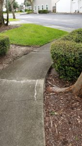 Sidewalk Tree Damage Repair